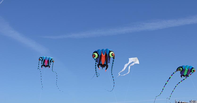 'Go Fly a Kite' at Babcock Ranch Festival of Kites